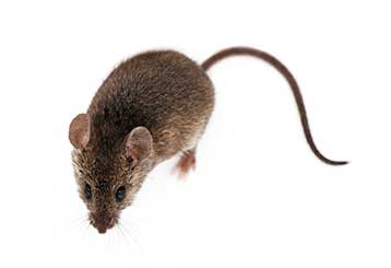 Rodent Proofing | Attic Cleaning Huntington Beach, CA