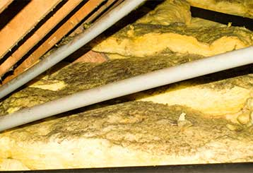 Signs Your Business Needs An Attic Cleaning | Attic Cleaning Huntington Beach, CA